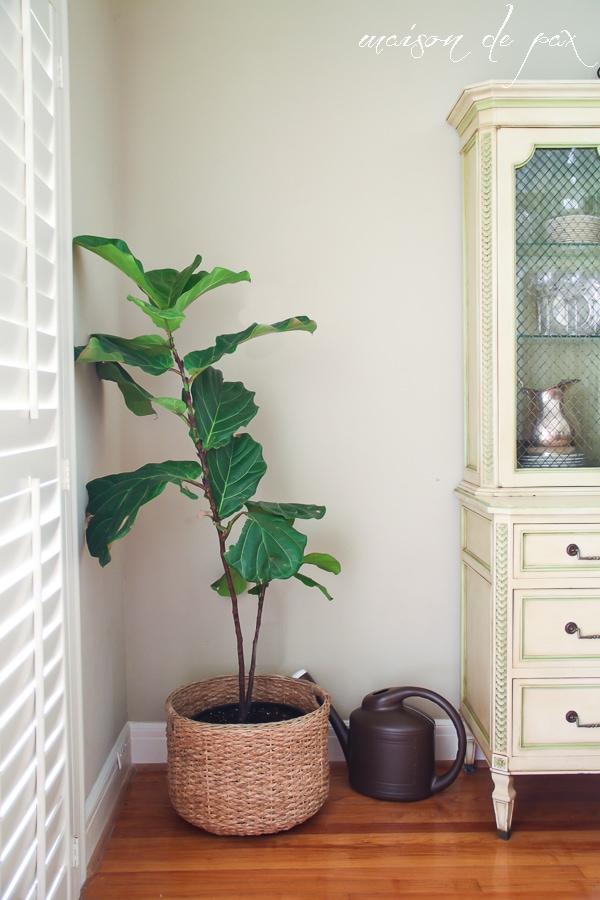 click for 10 ideas of places to put indoor plants! via maisondepax.com