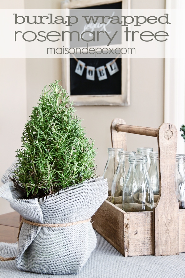 Burlap wrapped rosemary trees - great tutorial and perfect little holiday accents   via maisondepax.com #decor #plants #Christmas #tutorial #diy