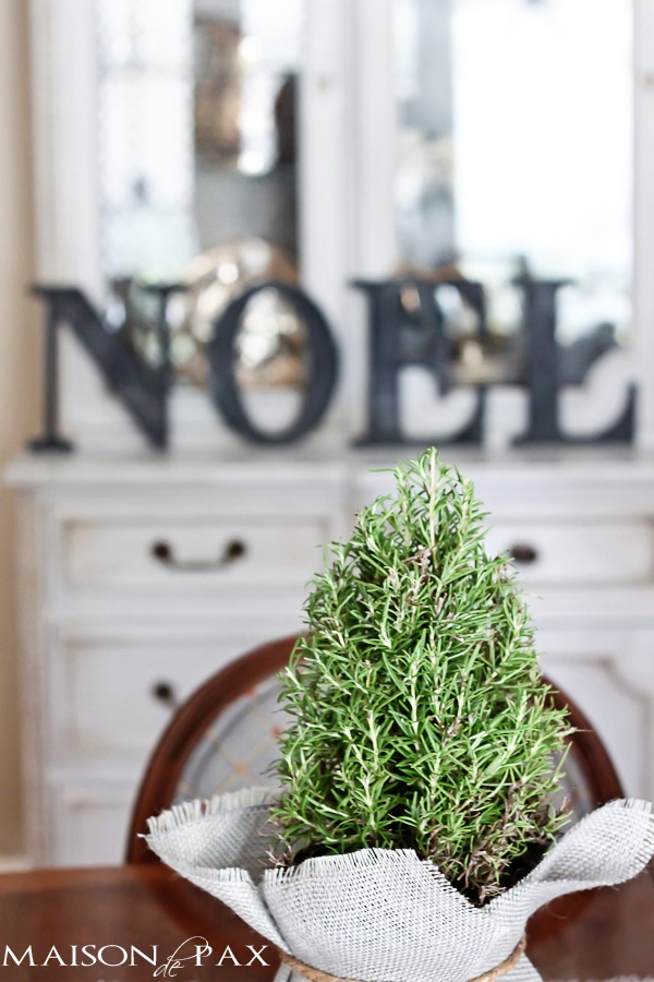 Burlap wrapped rosemary trees - great tutorial and perfect little holiday accents | via maisondepax.com #decor #plants #Christmas #tutorial #diy