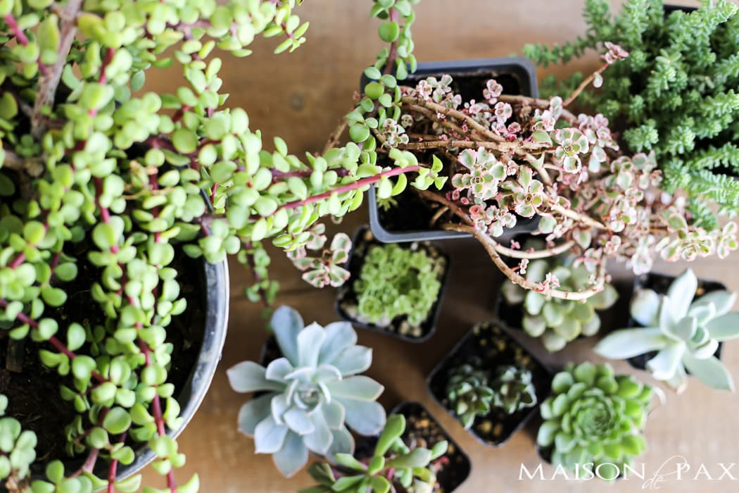 mini succulents make gorgeous fall planters