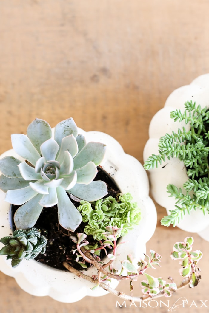 Looking for simple, easy fall decor? Try these fall succulent planters! A simple pumpkin vase makes for beautiful DIY fall decor. Click for the tutorial and tips to make them beautiful.